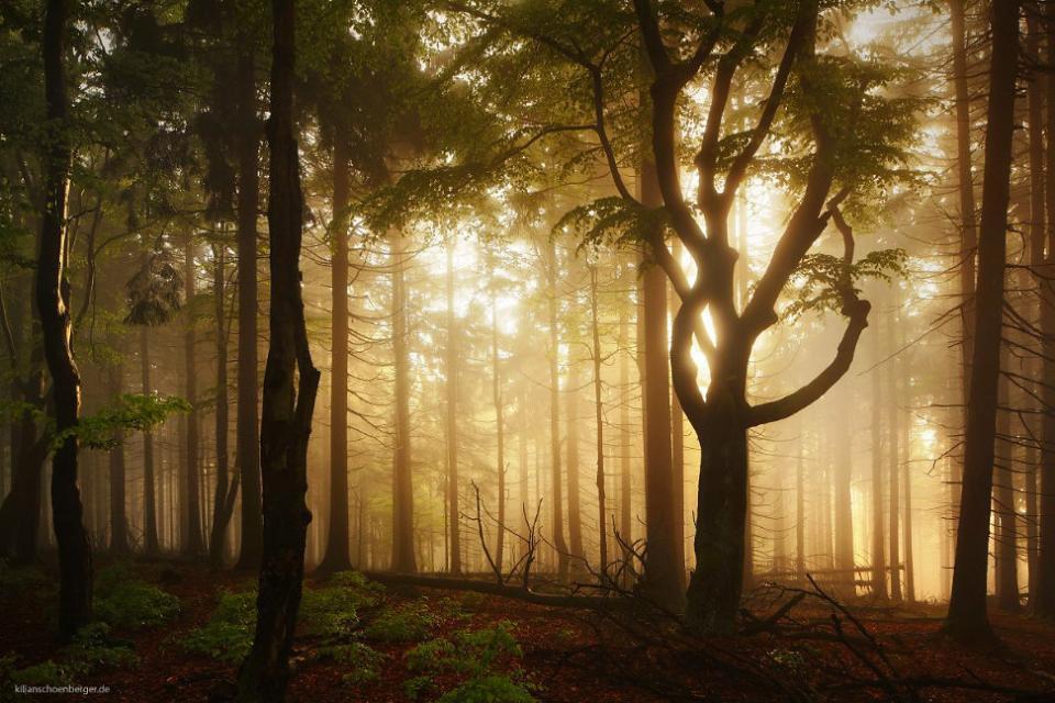 Forêt enchantée?