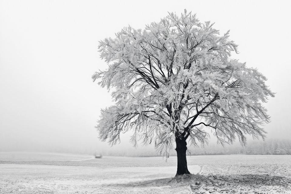 Solitaire sous la neige