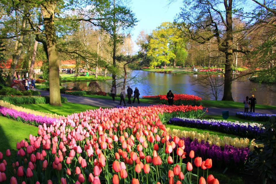 En Vid O Un Festival De Tulipes Aux Pays Bas Easyvoyage