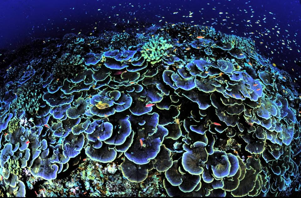 ETATS-UNIS : Pacific Remote Islands Marine National Monument