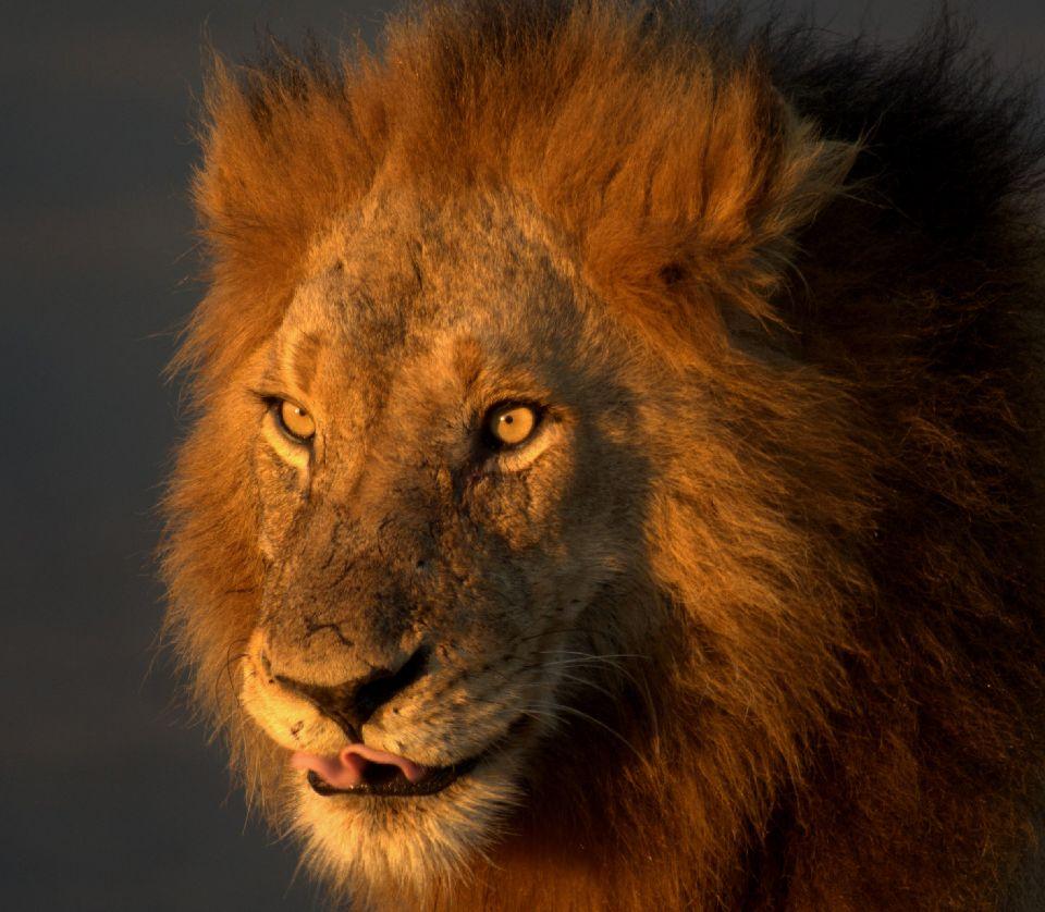 Il Parco Nazionale Kruger