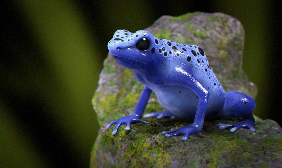 ᐈ Икра лягушек фото и картинки икра лягушки скачать
