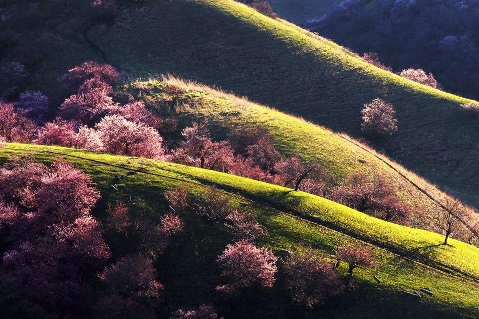 Yili Apricot Valley, Chine