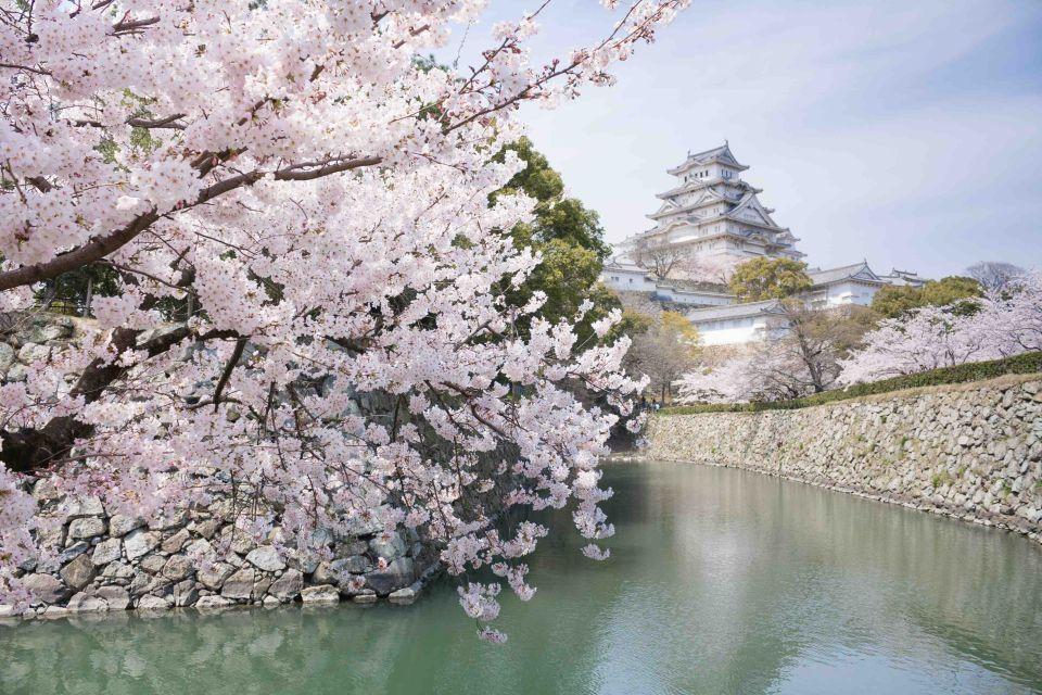 kirschbl te in japan ein traum in rosa easyvoyage. Black Bedroom Furniture Sets. Home Design Ideas