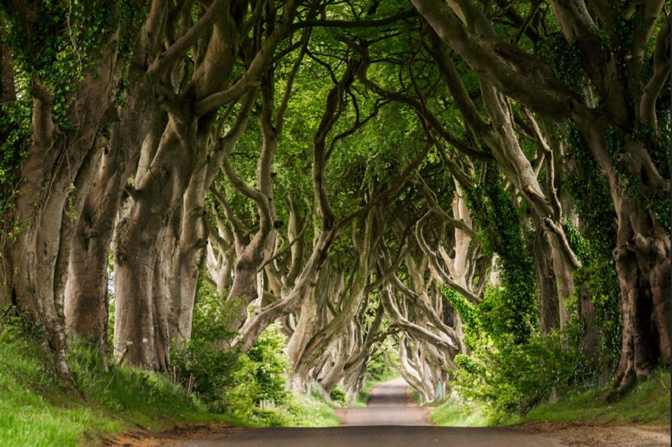 Dark Hedges-Allee, Nordirland