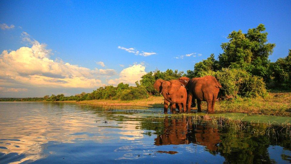Parc National de Kruger (Afrique du Sud)