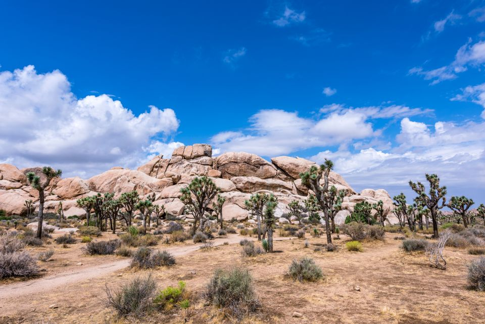 Parc National de Joshua Tree (Etats-Unis)