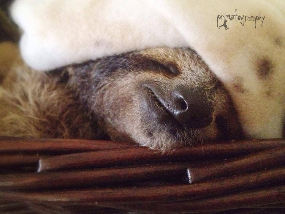 The Costa Rican Institute That Saves Orphaned Sloths