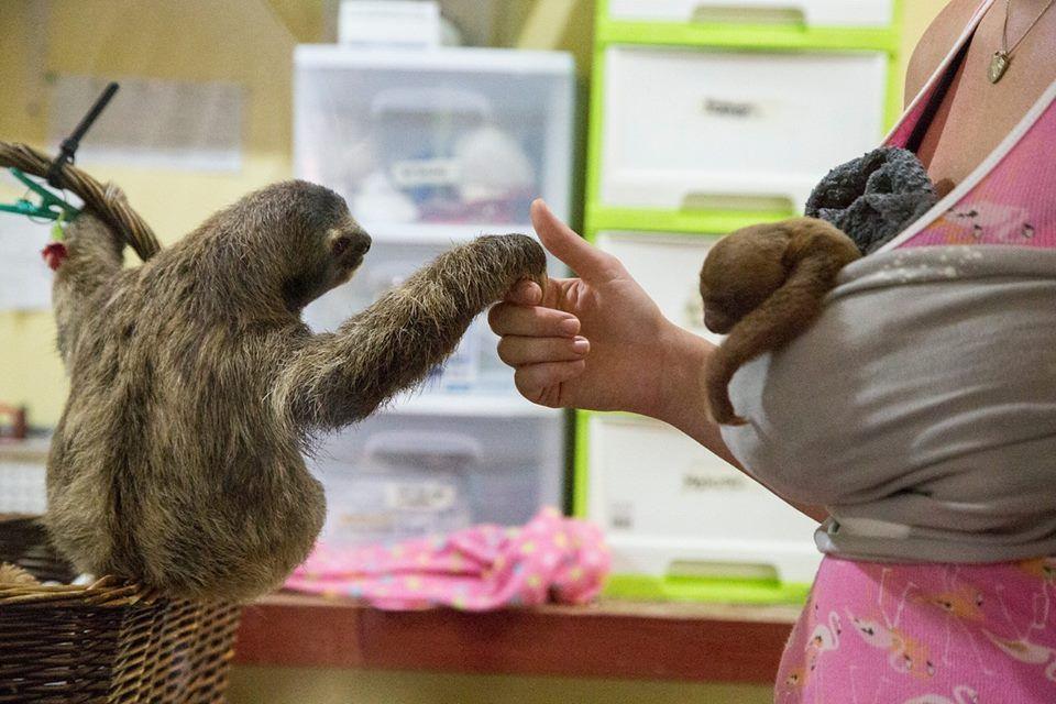 The Sloth Institute