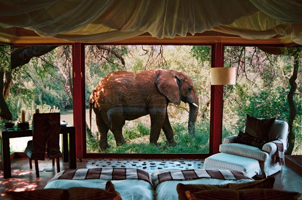 Un elefante che passeggia davanti il salone...