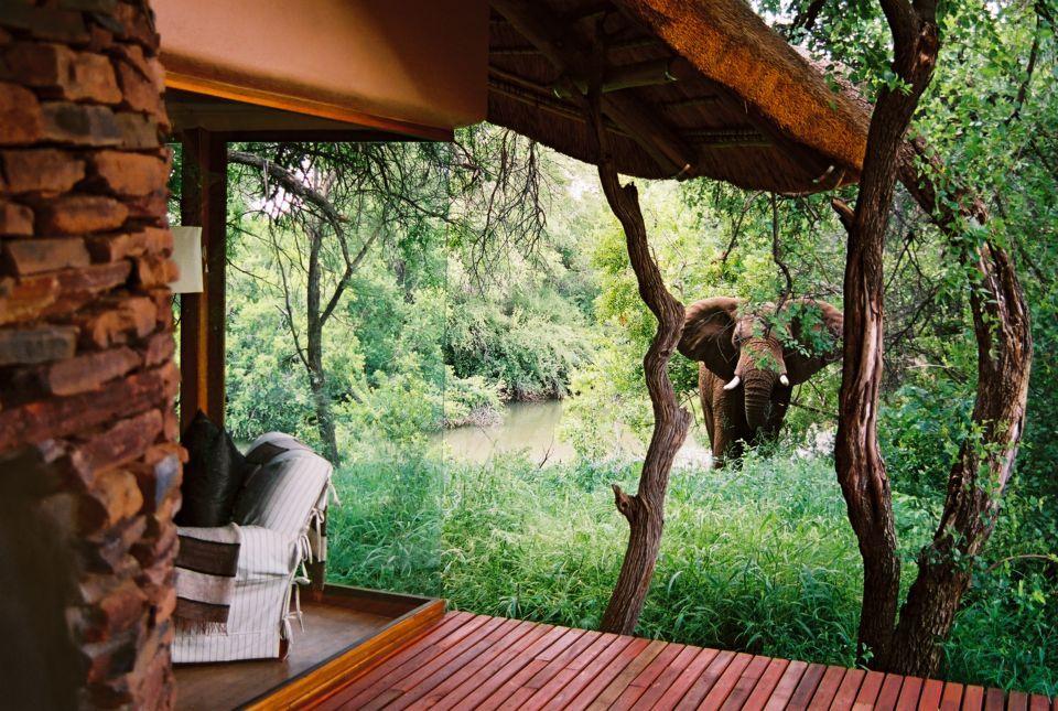 Un elefante nel giardino...