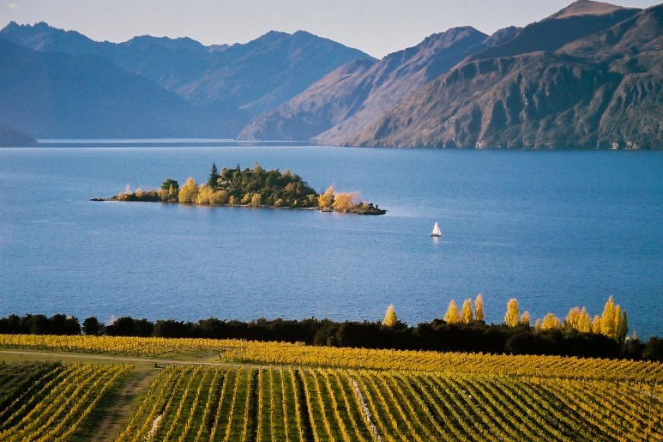 El lago Wanaka y el espectacular viñedo de Rippon (Rippon Vineyard)