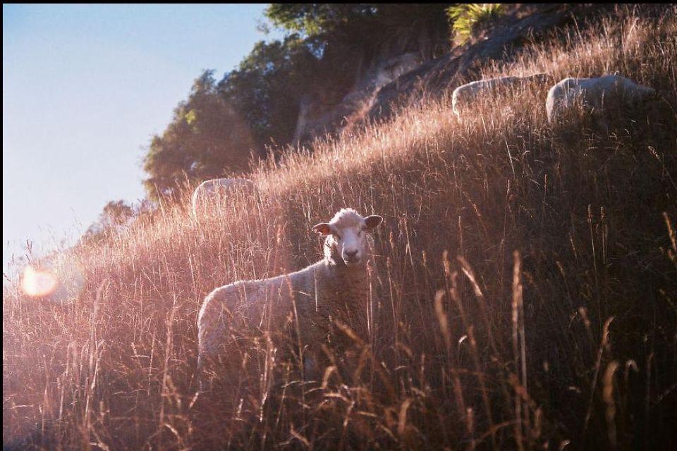 El país de los rebaños de ovejas (Sheepland)