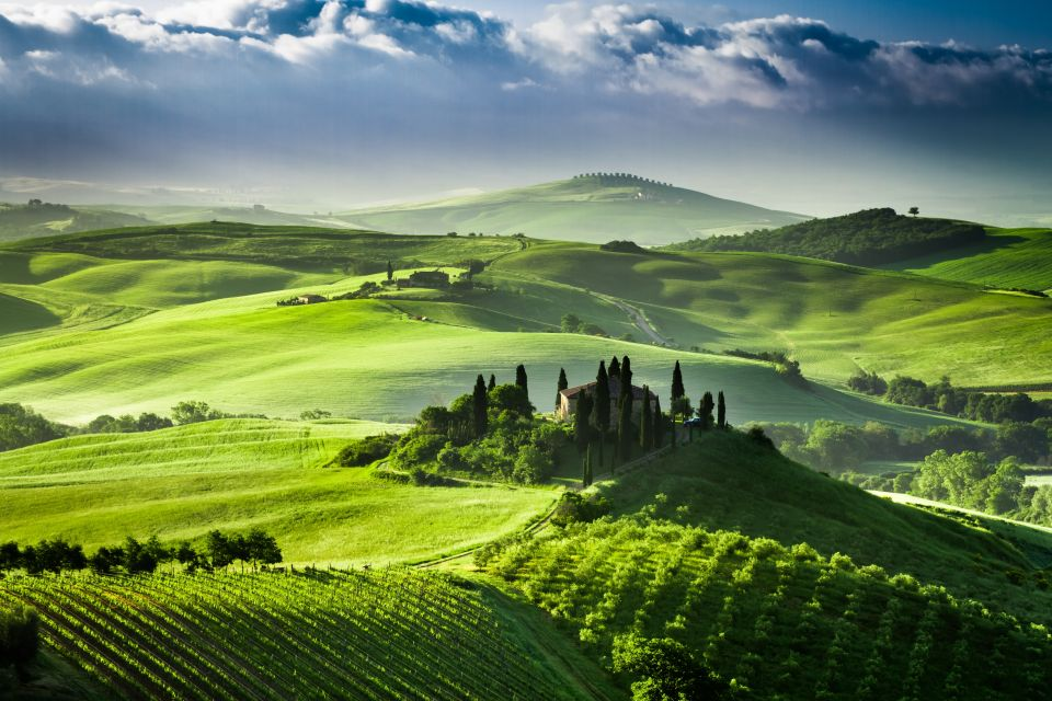 Oliveraies & vignes en Toscane
