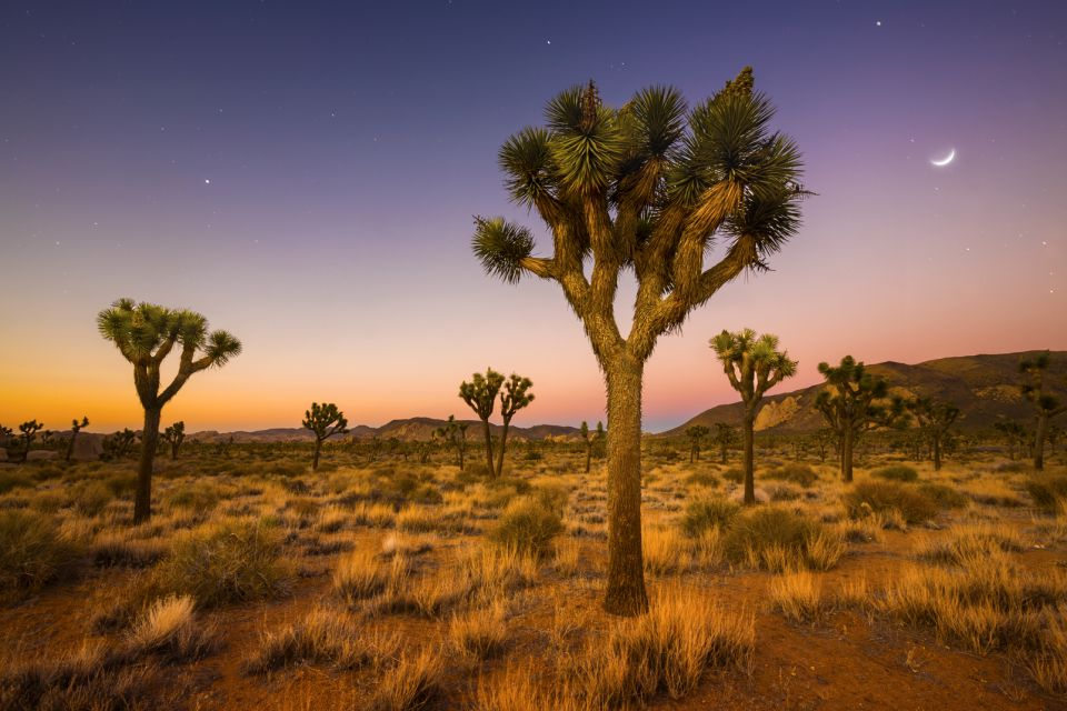 Best for photographers: Joshua Tree National Park