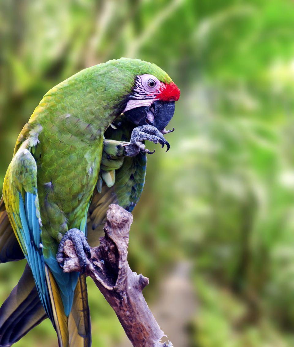 L'Amazone de Porto Rico