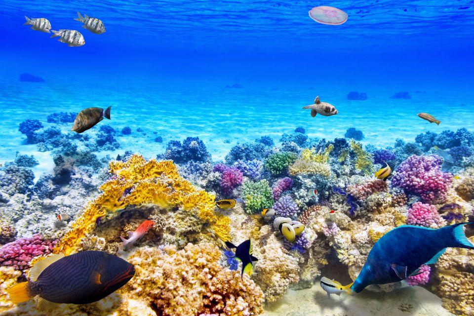 1)La Grande barrière de corail (Australie)