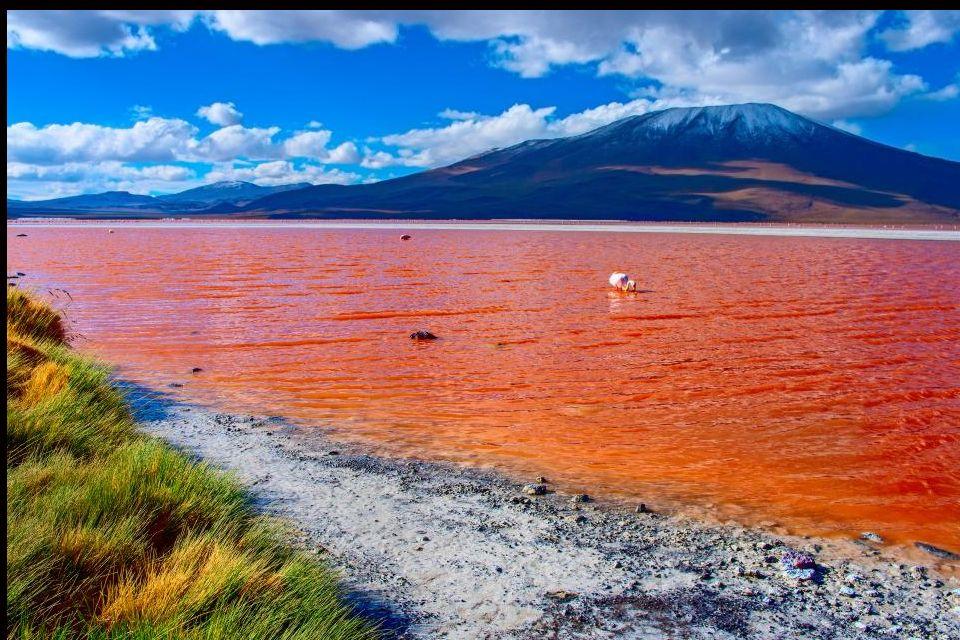 4 - La Laguna Colorada en Bolivie