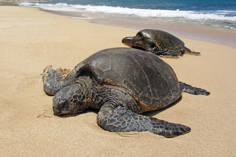 4) Le refuge Ostional pour les tortues