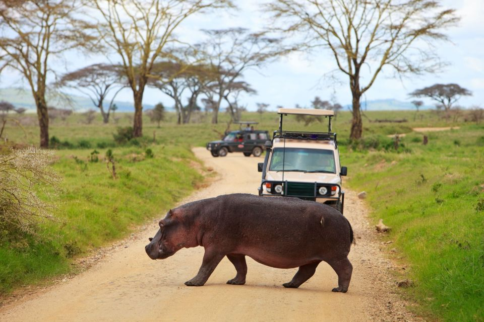 The best safari spots in Africa