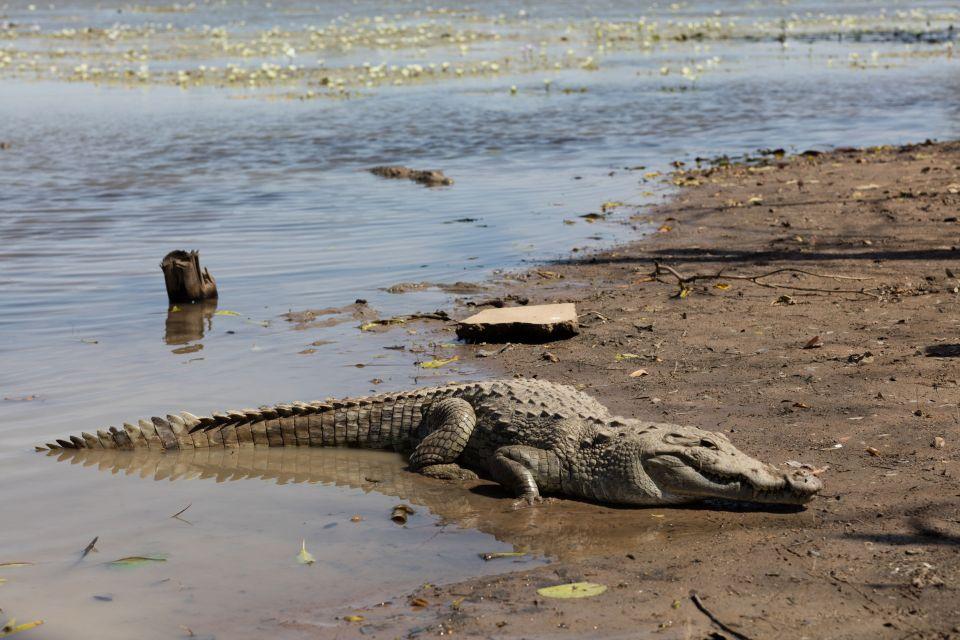 Les crocodiles, au Burkina Faso