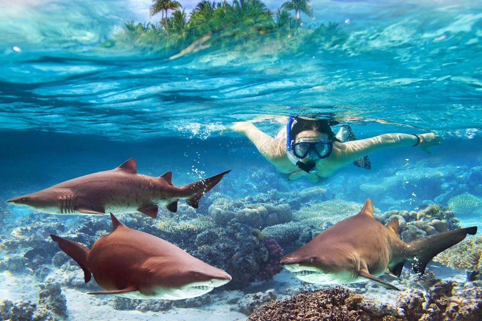 Plonger avec les requins