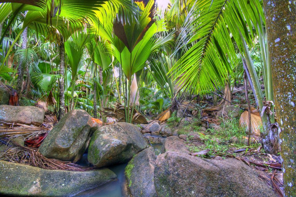 Isla de Praslin, Valle de Mai (2)
