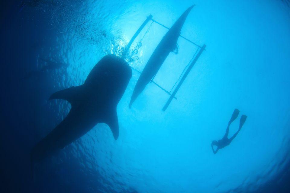 Rencontres entre plongeurs