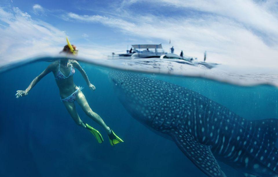 Dove nuotare con gli squali balena?