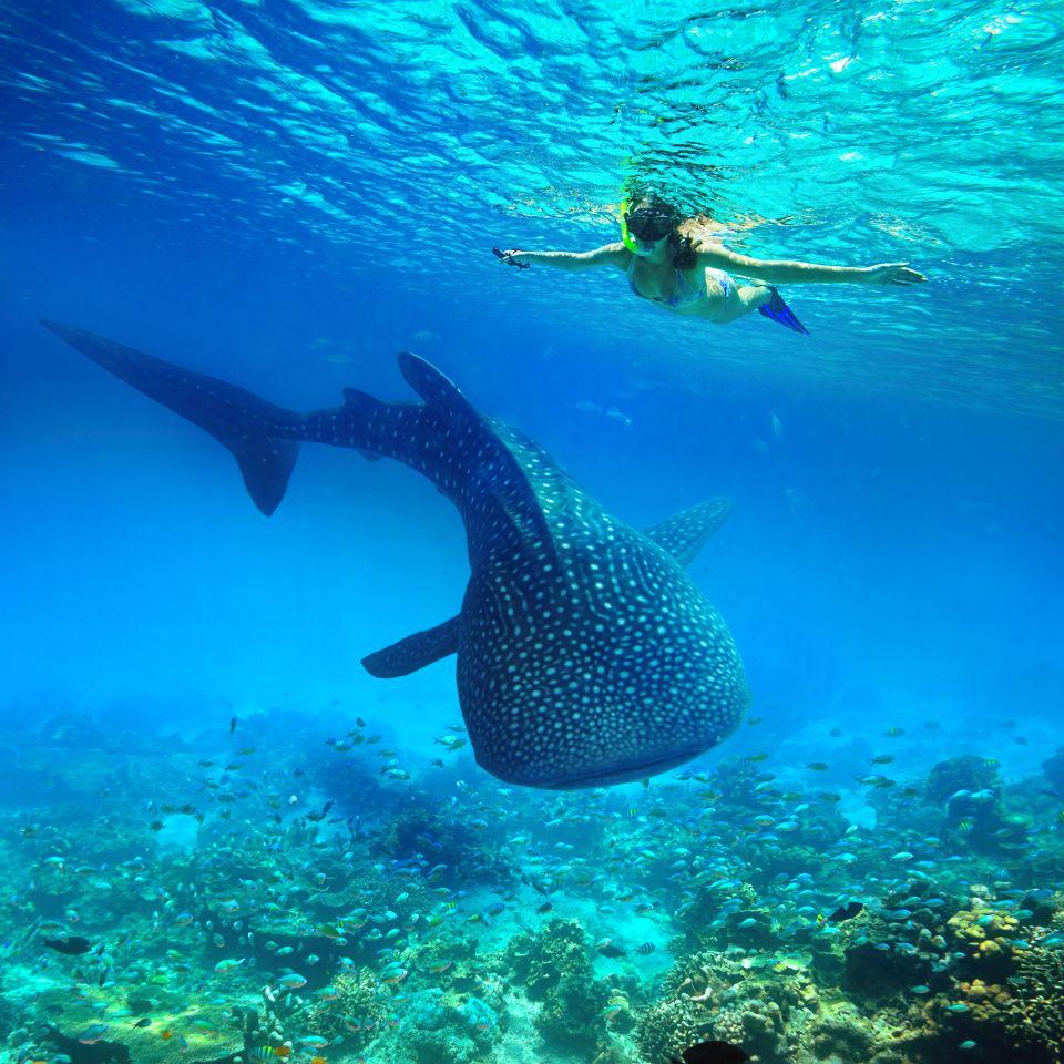 Isole Galapagos, Ecuador