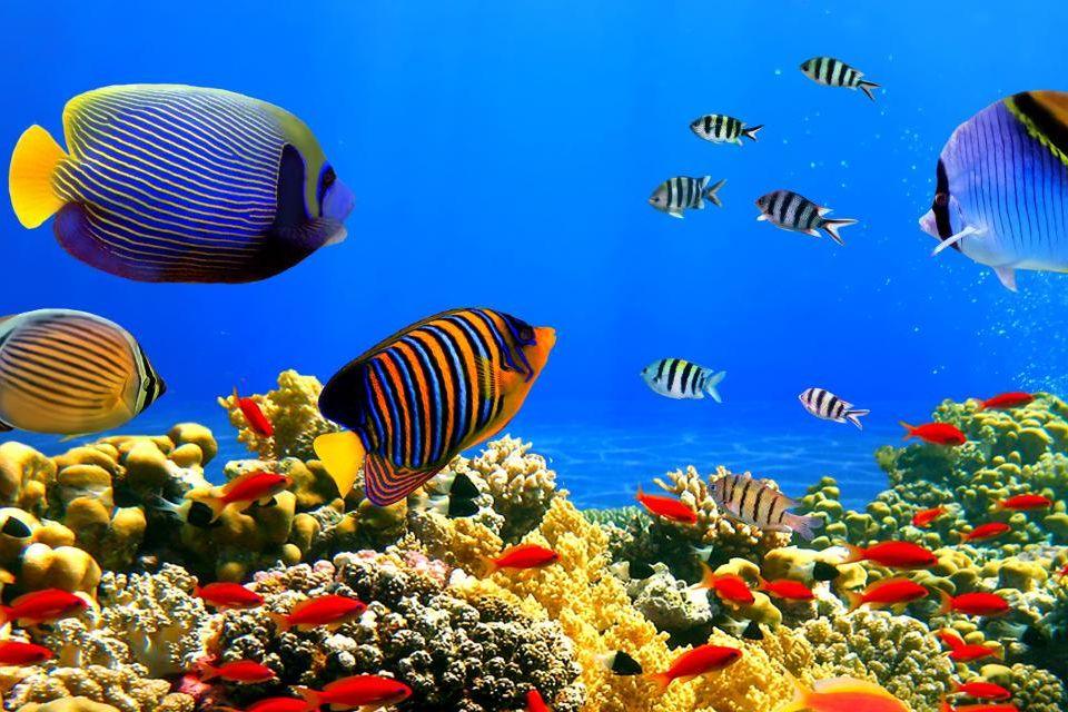 Plongée dans la mer Rouge
