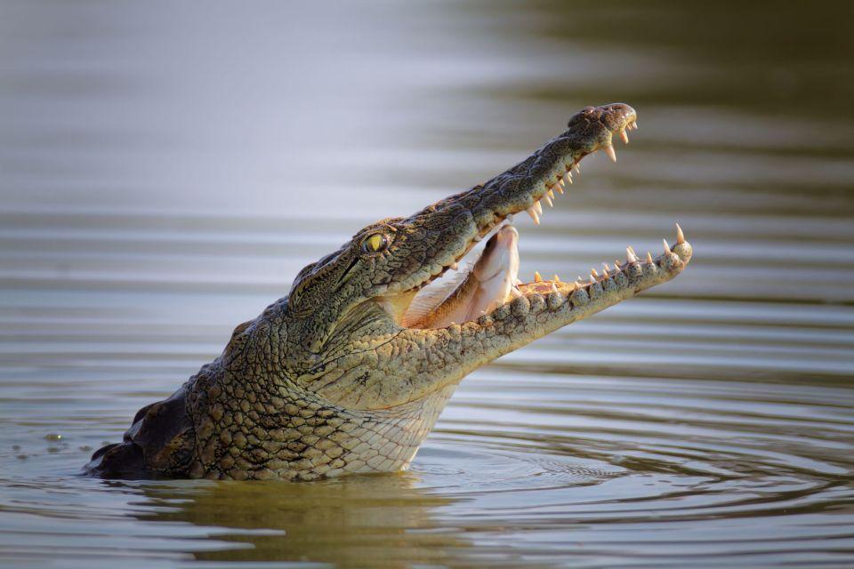 Quand une sc ne de meurtre devient un spectacle pour les for Attaque de crocodile dans une piscine