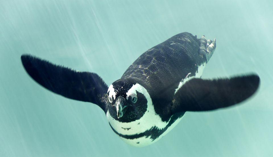 Pinguini lontano dai ghiacci