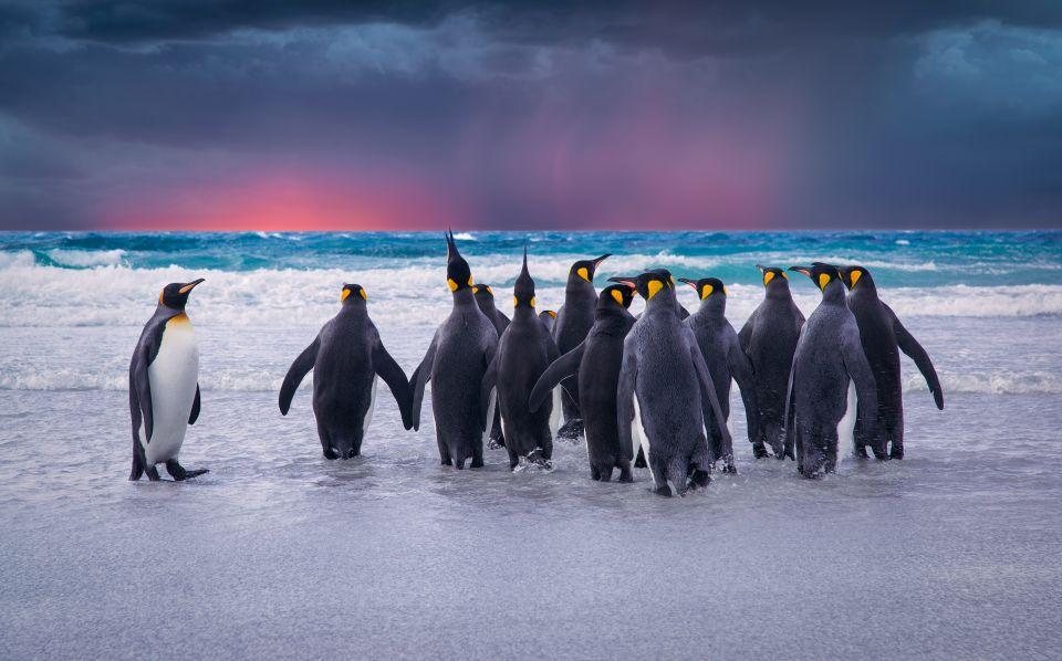 Isole Falkland, Regno Unito