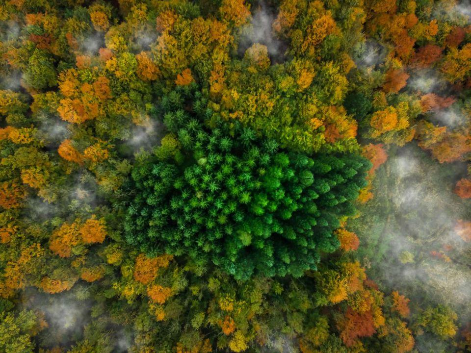 Kalbyris Forest, Denmark