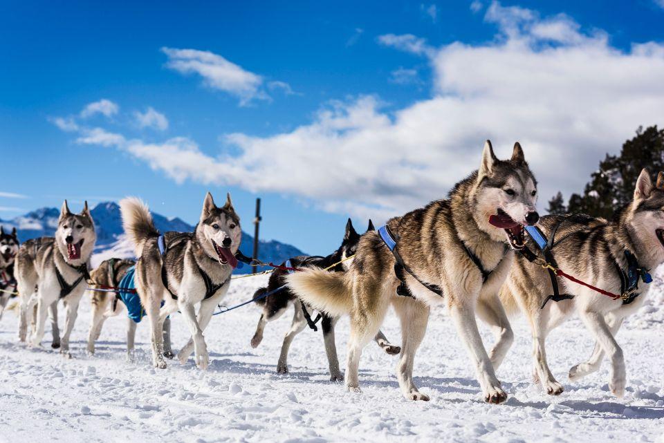 Faire du chien de traineau dans le Jura