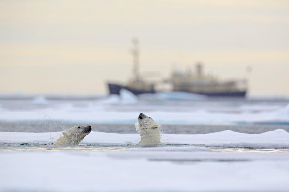 Für die Abenteurer: Die Arktis