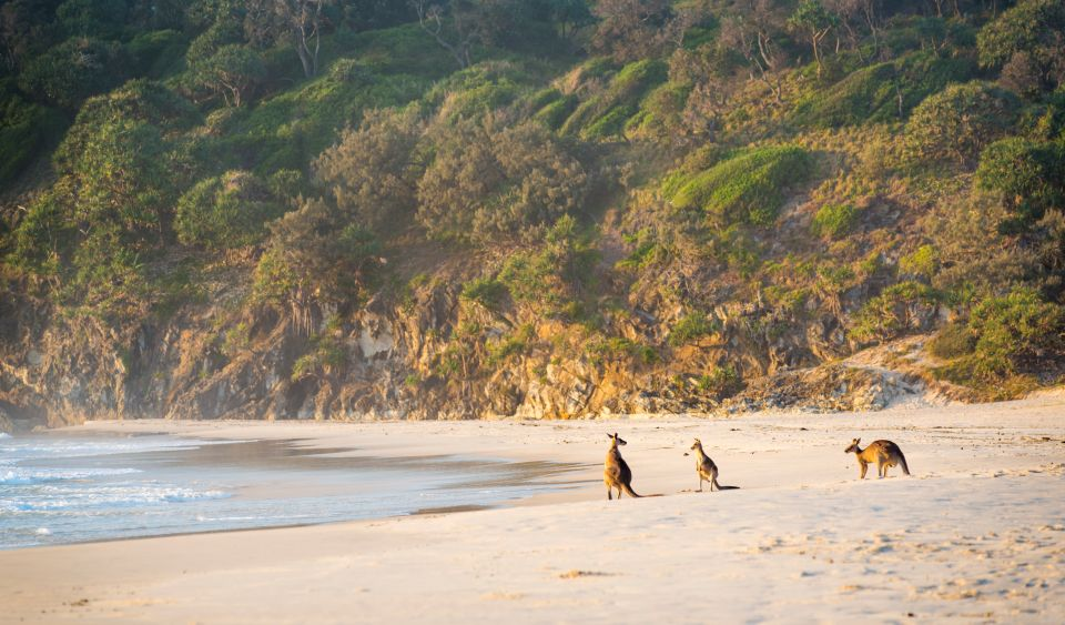 Une famille de Kangourous profite de la plage