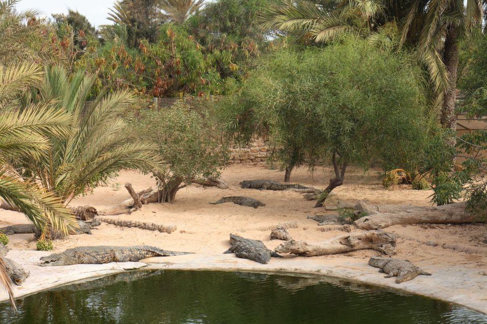 Les crocodiles de Djerba Explore
