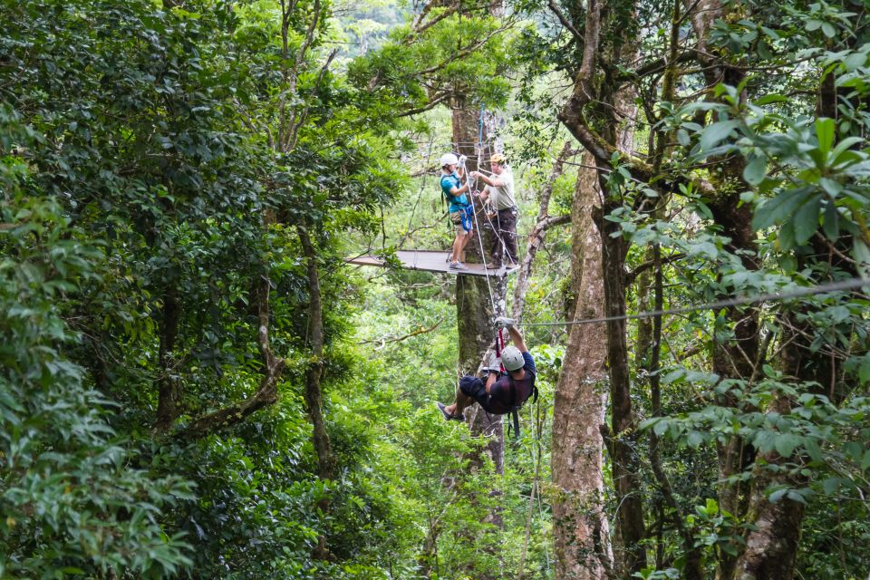 Canopy tours through the jungle