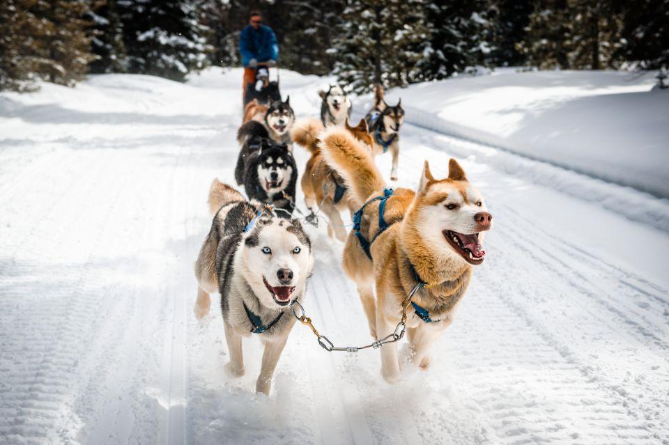 The Iditarod Trail