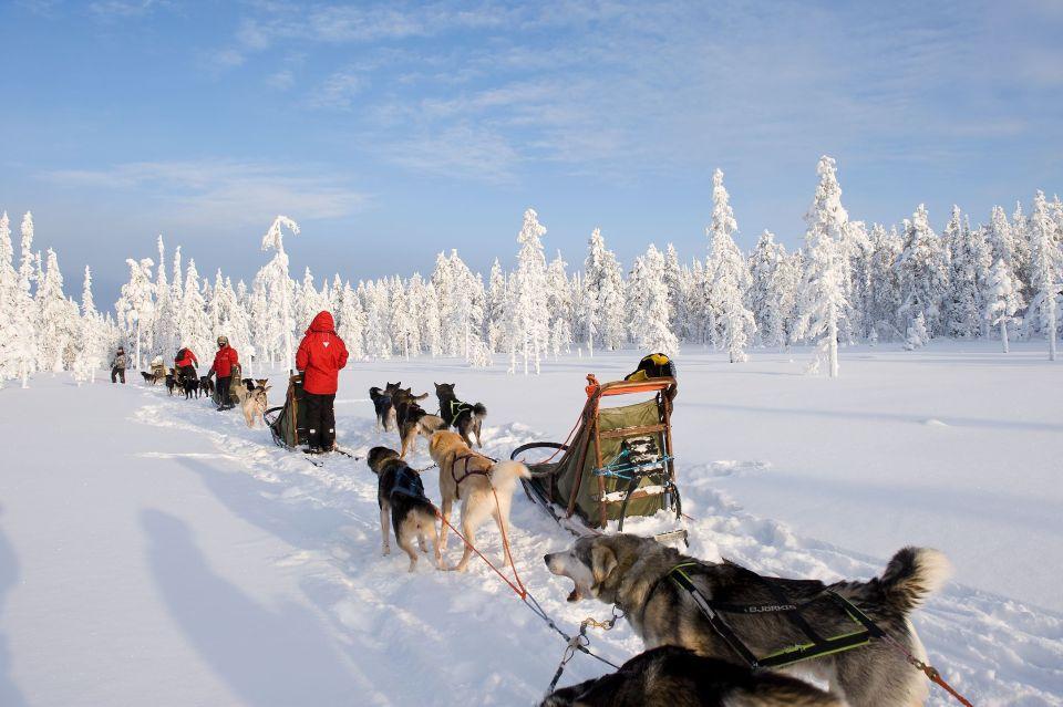 Traineau à chiens husky à Harriniva
