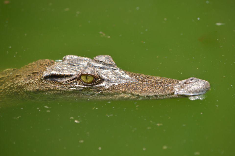 Darwing Crocodile Park - Australia