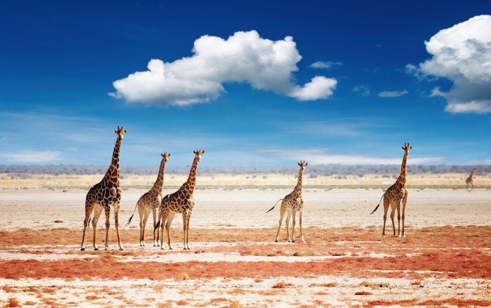 Parc National d'Etosha, Namibie