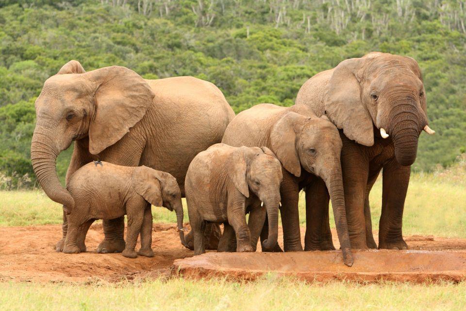 Les Eléphants, Thaïlande
