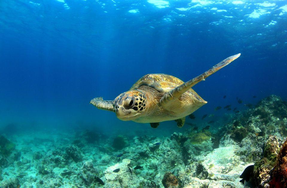Les tortues, Grèce