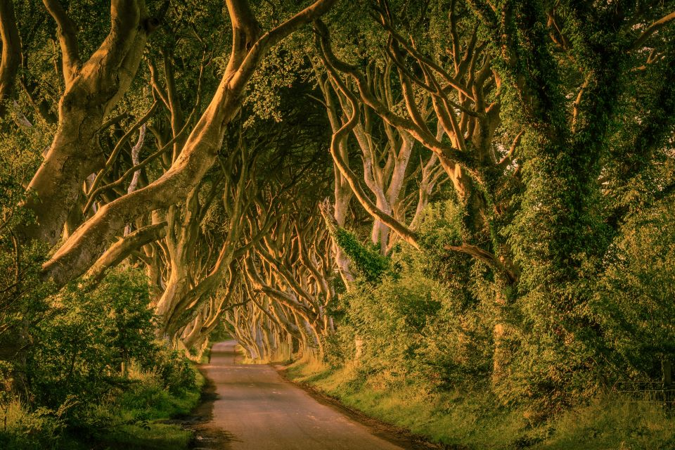 La ruta de los Dark Hedges