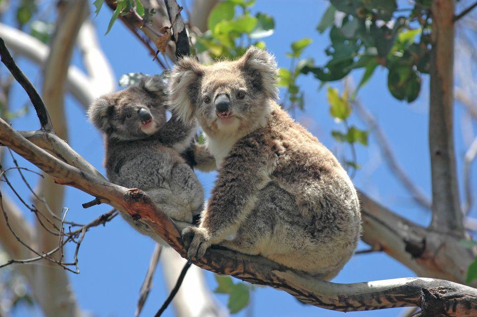 Melbourne Zoo - Australia