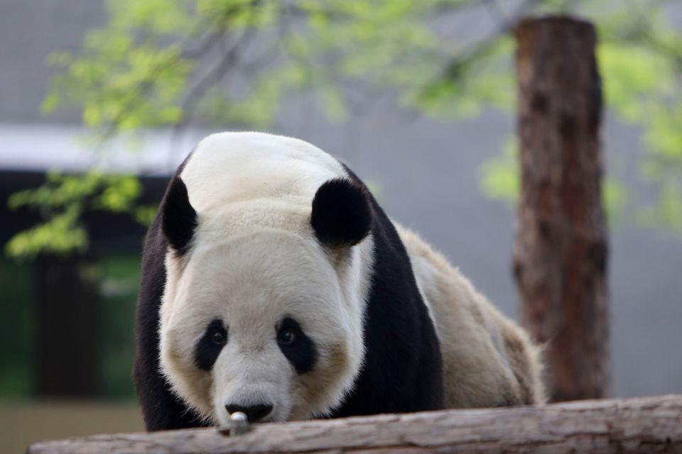 Beijing Zoo - China