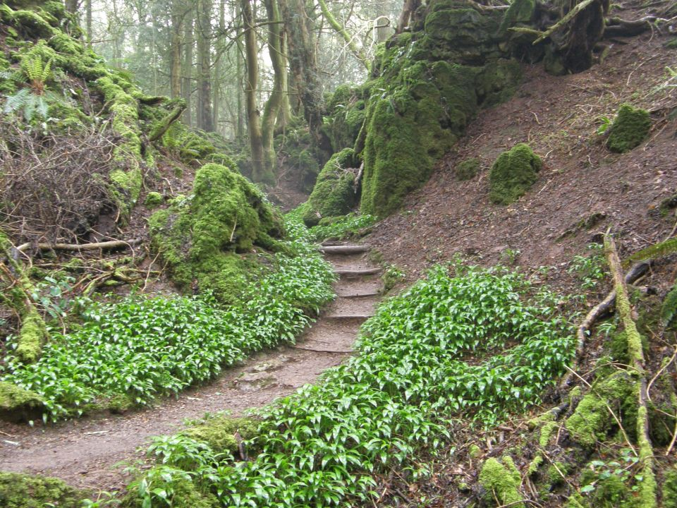 Forest of Dean, United Kingdom - J.R.R. Tolkien, Lord Of The Rings
